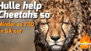 Rosestad 100.6 Nuus Brandpunt Running Wild Conservation Hulle help Cheetahs so